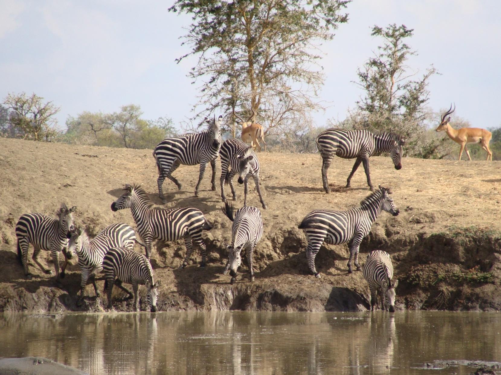 Selous Safari Tours