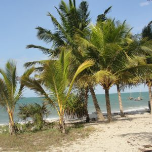 palm-at-beach-wildness-safari-tanzania