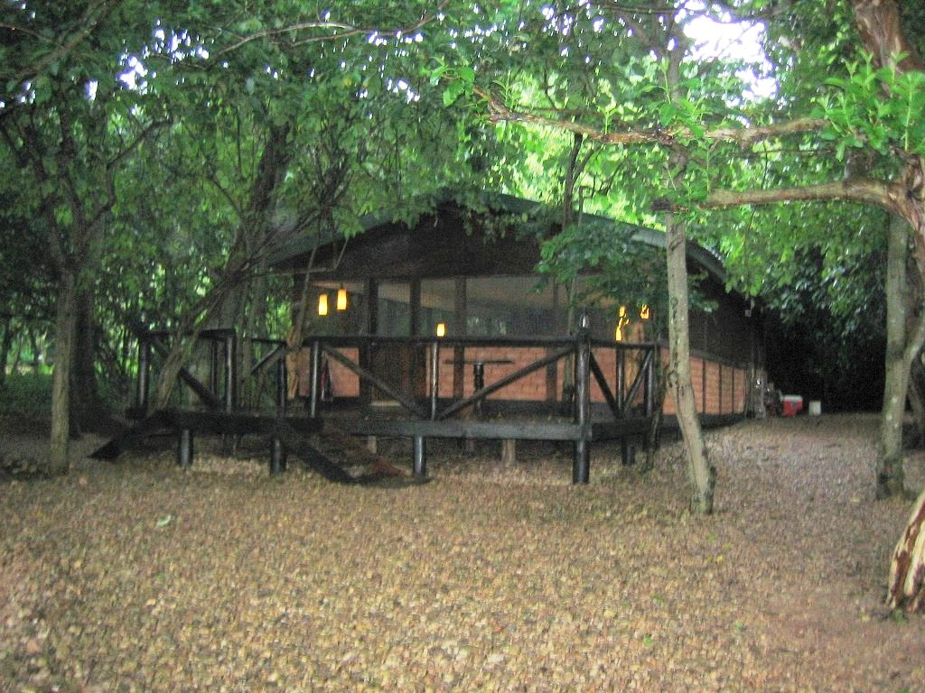 in the forest of gombe In the lush shade of ancient forest trees just off the shores of lake tanganyika lies the small yet intimate gombe forest lodge it offers complete.
